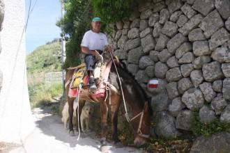 Treffen mit Weinbauer auf dem Pferd in den Bergen der Insel Ischia