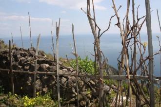 Wandern entlang der Weinreben in Piano Liguori Ischia