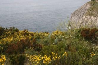 Kräuterwanderung Monte di Panza auf Ischia