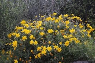 Testaccio - Die Blume