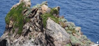 Ausflüge auf Ischia - Wanderungen