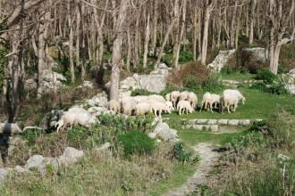 Wanderwoche-Ischia