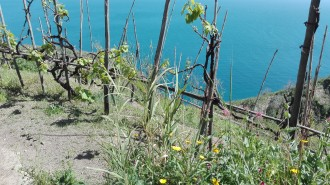 Gemeinde Barano di Ischia - Panoramawanderung