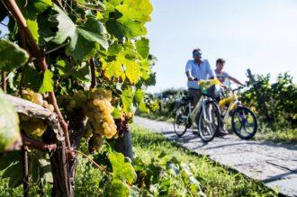 Weinwoche Ischia im September