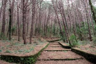 Wald-der-Maddalena
